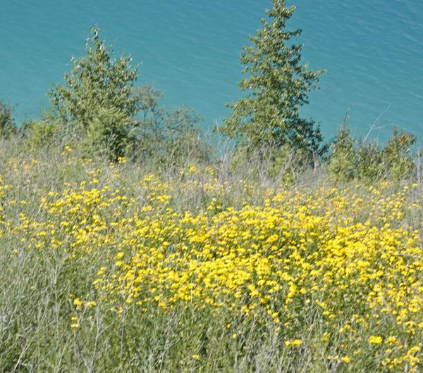 Beautiful yellow wildflowers.