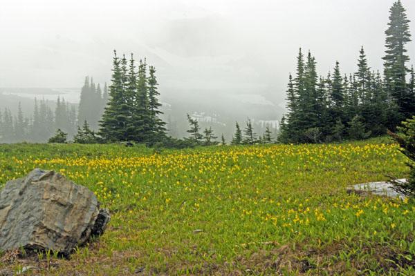 Alpine meadows at Logan Pass.