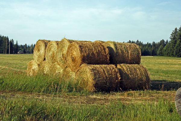 A shredded wheat farm.