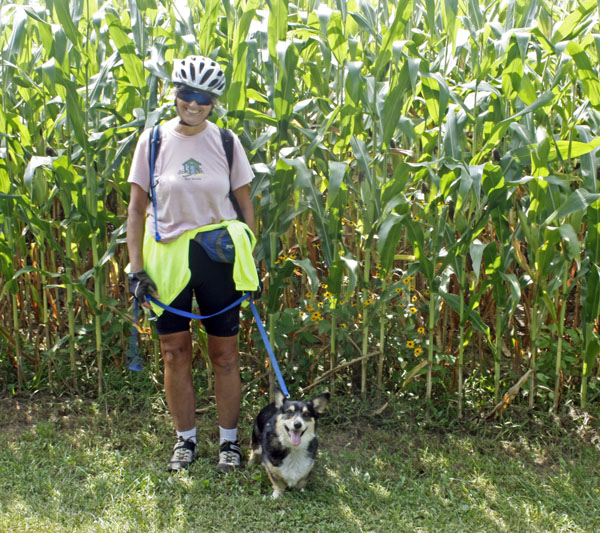 Kathy and Bailey are dwarfed by tall corn.