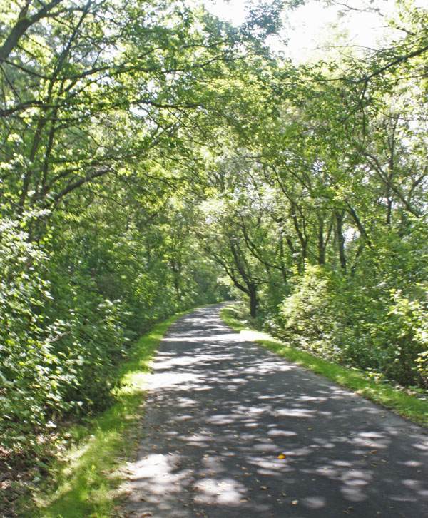 A canopy of trees covers the Root River State Trail.