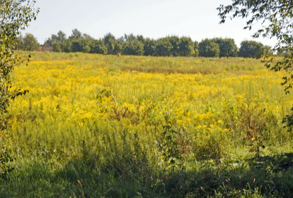 Yellow flowers and ragweed decorate the fields.